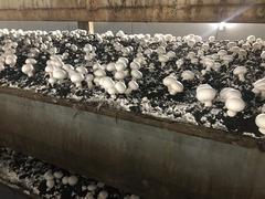 Продается работающая фабрика по выращиванию грибов шампиньонов. Овощехранилище