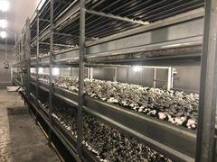 Продается фабрика c овощехранилищем по выращиванию шампиньонов
