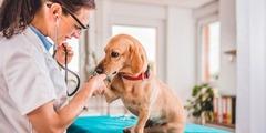 Эксклюзив! - прибыльный бизнес - ветеринарная клиника с Аптекой