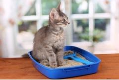 Производство товаров для животных — наполнители для кошачьего туалета.