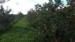 Продажа агробизнеса в Могилевской области